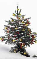 Weihnachtsbaum mit Schnee