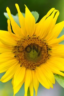 Sommer im Biogarten-11