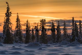 winterliche Sumpflandschaft, Lappland