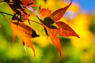 Bunter Herbst-38