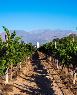 Vineyards in Cafayate, Argentina