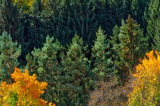 Schwarzwaldherbstwald