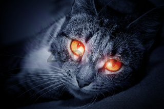 Cat with scary red glowing eyes