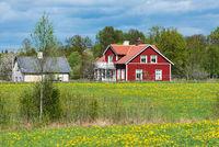 Rotes Holzhaus in Schweden und frisches Grün im Frühling
