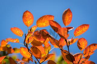 Bunter Herbst-37