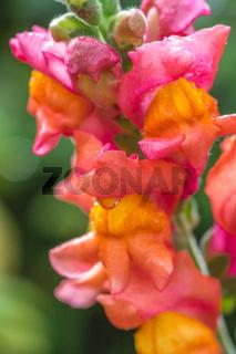Blumen im Biogarten-5