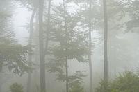 Wald im Nebel, Deutschland