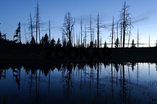 Silhouet reflection in pond, Yellowstone National Park