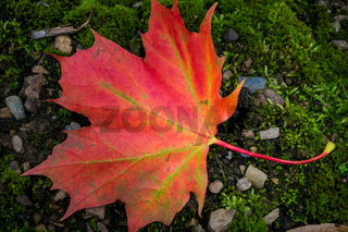 Bunter Herbst-3
