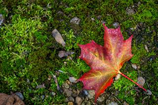 Bunter Herbst-1
