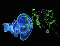 blue ear anatomy with green notes or music