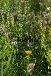 Sommer im Biogarten-48