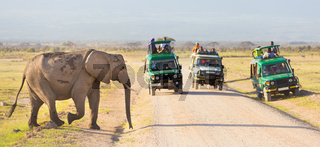 Elephantt crossing dirt roadi in Amboseli, Kenya.