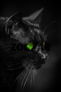 Katze Kater Augen gruen