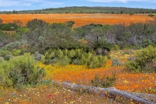 flowers at the namaqualand national park south africa