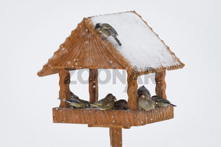 Tit birds and sparows black birds in handmade wooden winter birdhouse