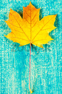 Yellow  leaf over blue  background