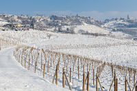 Vineyards covered with snow in Piedmont, Italy.