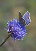 Butterfly on flower macro