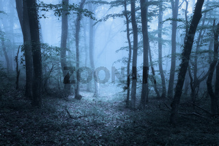 Spring forest in fog. Beautiful natural landscape. Vintage style