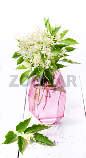 bunch elderflowers