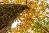 Tree in autoum