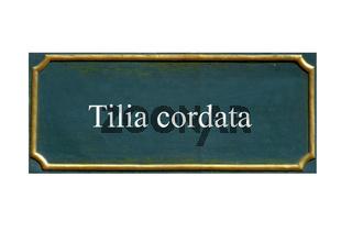 schild winterlinde, tilia cordata, einheimisches gewaechs