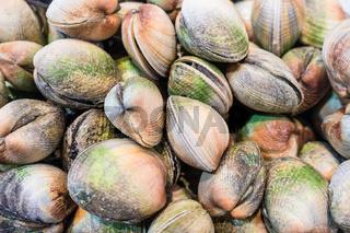 Frische Muscheln auf einem Fischmarkt