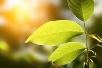 green leaf on blur background