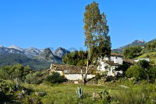 Finca mit Eukalyptus Baum  im Naturpark Sierra de Grazalema bei Grazalema, Spanien