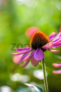 Sommer im Biogarten-40