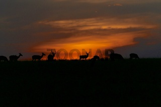 wonderful sunset at the masai mara national park kenya africa