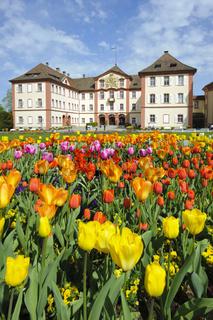 Schloss Mainau im Bodensee mit Tulpenblüte