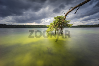 ziehende Wolken und Baumriesen im Wasser des klarsten Sees Deutschlands, Langzeitbelichtung