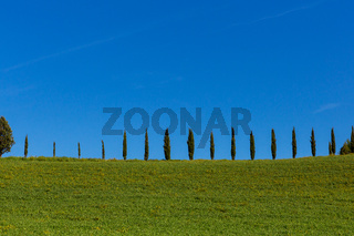 Toskana Zypressen Reihe gerade