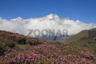 Spring scene in the Everest National Park