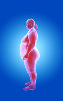fat and thin woman. x-ray view