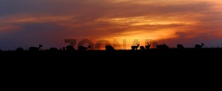 wonderful sunset with animals at the masai mara national park kenya
