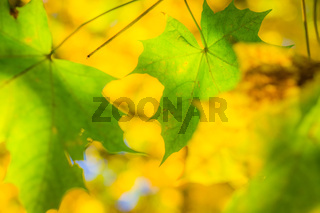 Bunter Herbst-48