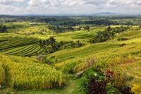 rice terrace near ubud in bali indonesia