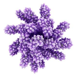 top view of purple lupine flowers in vase isolated on white background. 3d illustration