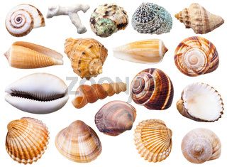 set of various mollusc shells isolated on white