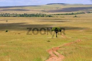 trail at the masai mara national park kenya africa