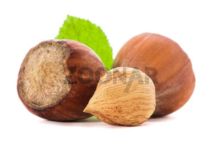 Hazelnuts and leaf isolated
