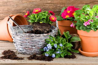 Töpfe und Schalen mit Frühlingsblumen bepflanzen