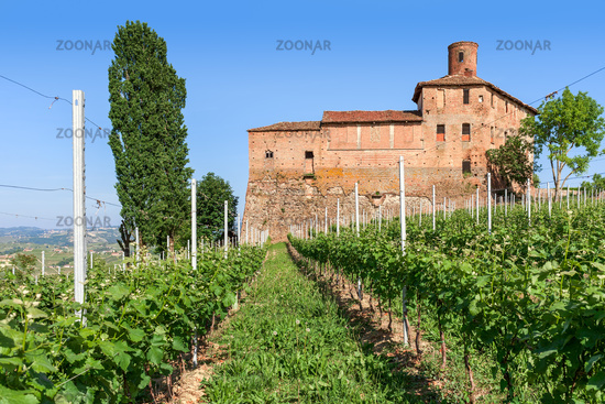 Old castle and vineyards in Italy.