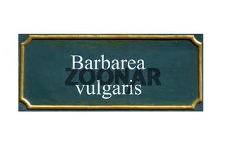 schild Barbarakraut