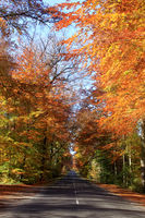 An avenue of beeches