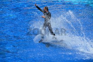 Grosser Tuemmler, Delphin, Marineland, Show