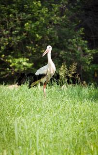 stork circonia in garden